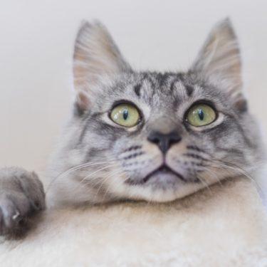 【朗報】タイピー日記殺処分寸前の保護猫2匹はでんちゃんりんちゃんに似てる?タイピーさんの名前は?