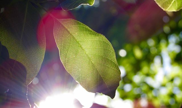 太陽光 黄ばみ