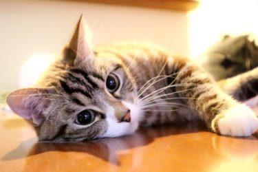 【花江夏樹】愛猫の撮影のコツは?見分け方,名前の由来,種類,年齢についても!
