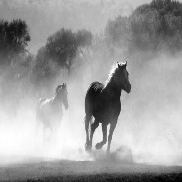 ラッキーライラックの引退はいつ?次走は有馬記念でルメール騎手?