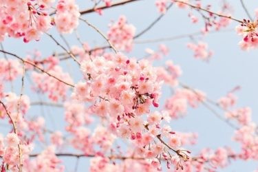 坂口健太郎・高畑充希が結婚するのは年末とか春先と言われている理由は?ドラマが影響?