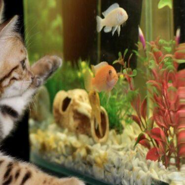 【動画】金魚電話ボックス裁判まとめとフランスの電話ボックス水族館紹介