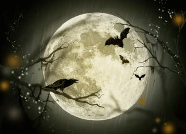 月のかけらと鶴のほまれ(お酒)はどんな味?口コミ・感想・評判【まとめ】