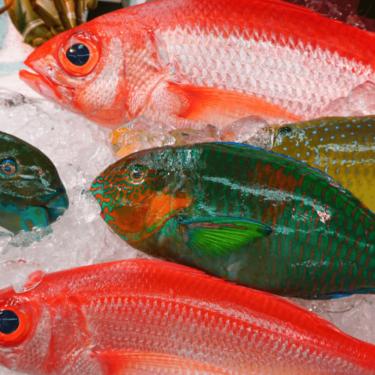 仮死状態の魚が浮いて拾える海岸って?沖縄の寒波が原因?美ら海水族館の魚は?