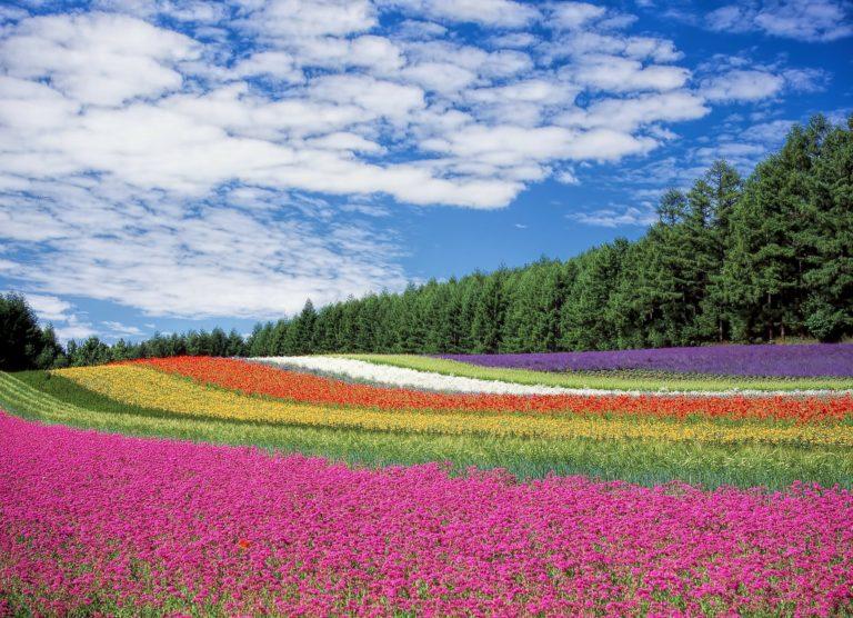 カラフル花畑
